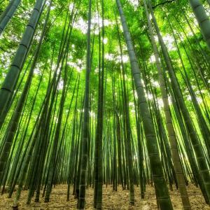 Bambou - mot du glossaire Tête à modeler.Le bambou est une longue plante à tige creuse originaire des pays chauds. éfinition et activités associées au mot bambou.