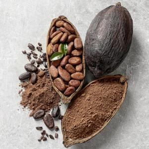 cacao - mot du glossaire Tête à modeler. Le cacao est la graine du cacaoyer. Définition et activités associées au mot cacao.