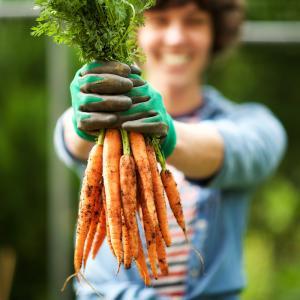 Carotte - mot du glossaire Tête à modeler. La carotte est une plante potagère. Définition et activités associées au mot carotte.