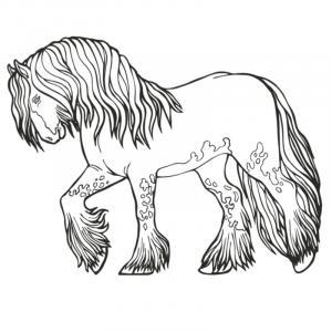 Coloriage du dessin d'un cheval aux pattes très poilues à imprimer pour les enfants. Sur ce dessin le chaval a de longs poils qui tombent sur ses sabots.