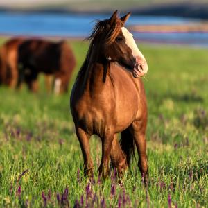 cheval - mot du glossaire Tête à modeler.   Définition et activités associées au mot cheval.