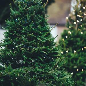 Tous nos conseils pour bien choisir votre sapin de Noël