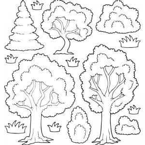 Un coloriage arbre pour tous les enfants qui aiment la nature et les arbres. Page 1