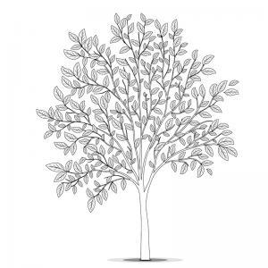 Un coloriage arbre pour tous les enfants qui aiment la nature et les arbres. Page 3