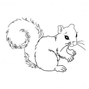 Voici un coloriage écureuil à imprimer gratuitement. Un dessin d'écureuil à imprimer pour tous les petits amoureux des animaux. Page 06