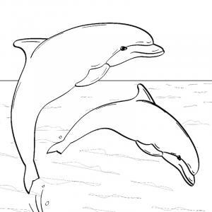 Coloriage de dauphin pour les enfants, à télécharger gratuitement et à imprimer. Un coloriage sur le thème de la mer pour occuper les enfants. Ce coloriage pourra être utilisé pour illustrer des dessins ou à coller dans un cahier de coloriages.