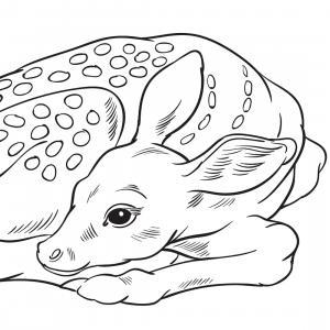 Retrouvez un coloriage de cerf ! Un dessin à imprimer gratuitement sur le thème des animaux de la forêt - Page 02