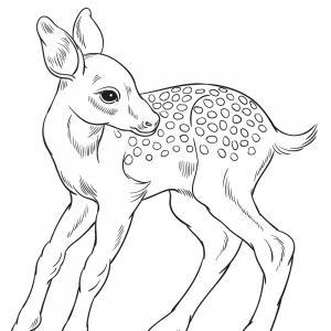 Retrouvez un coloriage de cerf ! Un dessin à imprimer gratuitement sur le thème des animaux de la forêt - Page 05