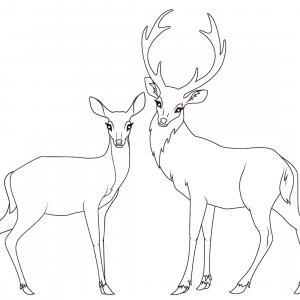Retrouvez un coloriage de cerf ! Un dessin à imprimer gratuitement sur le thème des animaux de la forêt - Page 07