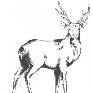 Retrouvez un coloriage de cerf ! Un dessin à imprimer gratuitement sur le thème des animaux de la forêt - Page 10