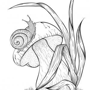 Voici un coloriage d'un champignon à imprimer gratuitement. Un joli dessin à colorier sur le thème de l'automne et de la nature. Modèle 01