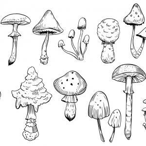 Voici un coloriage d'un champignon à imprimer gratuitement. Un joli dessin à colorier sur le thème de l'automne et de la nature. Modèle 06