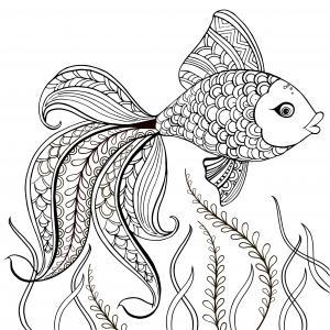 Imprimer et colorier le dessin d'un gros poisson arc en cielImprimer et colorier le dessin d'un gros poisson arc en ciel