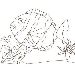 Imprimer et colorier le dessin d'un gros poisson clown Imprimer et colorier le dessin d'un gros poisson clown