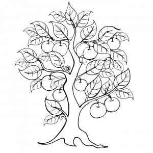 Voici un coloriage de pommier à imprimer gratuitement. Un dessin à imprimer sur le thème de l'automne et de la nature. Modèle 06