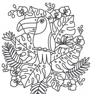 coloriage d'un toucan