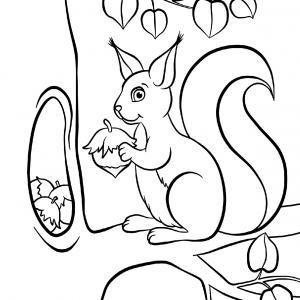 Voici un coloriage écureuil à imprimer gratuitement. Un dessin d'écureuil à imprimer pour tous les petits amoureux des animaux. Page 05