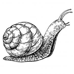 Voici un coloriage d'escargot à imprimer gratuitement. Un dessin d'escargot à imprimer pour tous les petits amoureux des animaux. Page 09