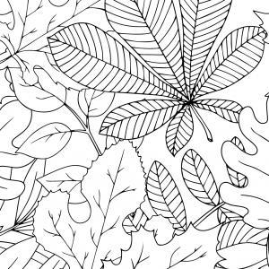 Voici un coloriage de feuilles d'arbre à imprimer gratuitement. Un dessin de feuilles à imprimer pour tous les petits amoureux des arbres et de la nature. Page 03