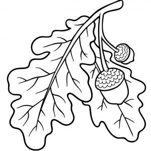 Voici un coloriage de feuilles d'arbre à imprimer gratuitement. Un dessin de feuilles à imprimer pour tous les petits amoureux des arbres et de la nature. Page 04