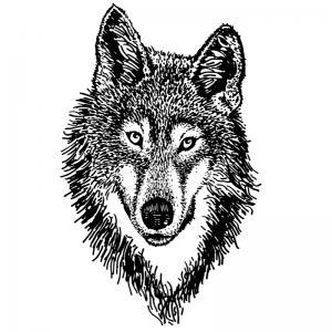 Voici un coloriage loup à imprimer gratuitement. Un dessin de loup à imprimer pour tous les petits amoureux des animaux. Page 4