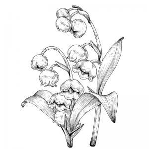 Coloriage muguet : un dessin avec du muguet à imprimer pour la fête du travail et le 1er mai. Page 1