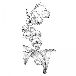 Coloriage muguet : un dessin avec du muguet à imprimer pour la fête du travail et le 1er mai. Page 2