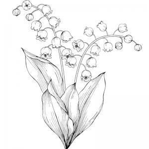 Coloriage muguet : un dessin avec du muguet à imprimer pour la fête du travail et le 1er mai. Page 4