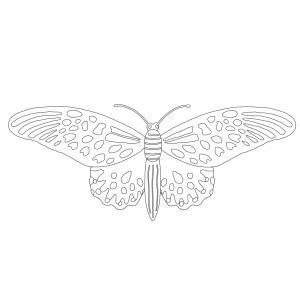 Coloriage papillon : voici un dessin à imprimer avec un joli papillon. Un coloriage à imprimer sur le thème des papillons - Page 2