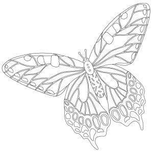Coloriage papillon : voici un dessin à imprimer avec un joli papillon. Un coloriage à imprimer sur le thème des papillons - Page 3