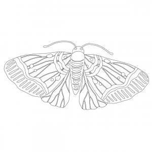 Coloriage papillon : voici un dessin à imprimer avec un joli papillon. Un coloriage à imprimer sur le thème des papillons - Page 5