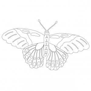 Coloriage papillon : voici un dessin à imprimer avec un joli papillon. Un coloriage à imprimer sur le thème des papillons - Page 8