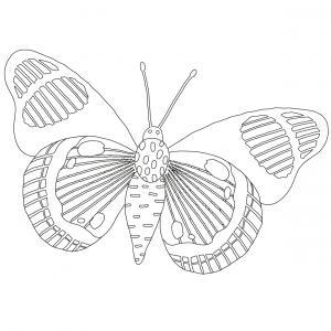 Coloriage papillon : voici un dessin à imprimer avec un joli papillon. Un coloriage à imprimer sur le thème des papillons - Page 10