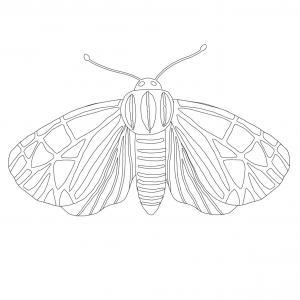 Coloriage Papillon Dessin Papillon La Selection De Tete A Modeler