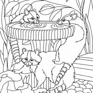 Voici un coloriage de raton laveur à imprimer gratuitement. Un dessin de raton à imprimer pour tous les petits amoureux des animaux. Page 07