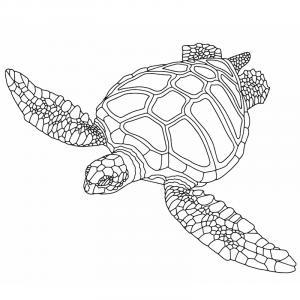 Voici un coloriage de tortue à imprimer gratuitement. Un dessin de tortue à imprimer pour tous les petits amoureux des animaux de la mer. Page 06