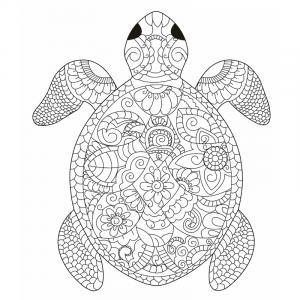 Voici un coloriage de tortue à imprimer gratuitement. Un dessin de tortue à imprimer pour tous les petits amoureux des animaux de la mer. Page 07