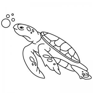 Coloriage des animaux marins. Dessin des animaux vivants dans la mer, tous les animaux de la mer : les poissons, les mammifères marins comme les baleines et les dauphins et aussi les coquillages et les crustacés. Le coloriage des animaux de la mer est l