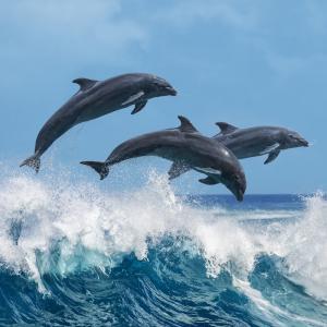 dauphin- mot du glossaire Tête à modeler. Le dauphin est un mammifère marin. Définition et activités associées au mot dauphin.