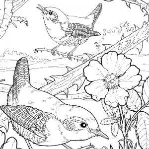 Dessin fleur : voici un dessin à imprimer avec une jolie fleur. Un coloriage à imprimer sur le thème des fleurs et de la nature - Page 18
