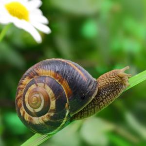 escargot - mot du glossaire Tête à modeler. Définition et activités associées au mot escargot.