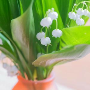 La fête du travail 2021 se fêtera le 1er mai 2021. Aussi appelé fête des travailleurs ou fête du muguet, le 1er mai est toujours férié en France. Le 1er mai, on rend hommage aux grandes manifestations de 1890. Retrouvez des infos sur la fête et sur le mug