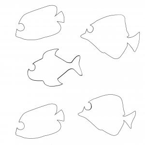 Gabarit des poissons multicolores