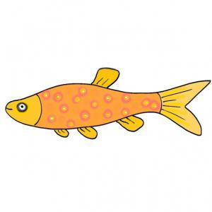 Cette image de poisson est à imprimer pour le plus grand plaisir de votre enfant, il pourra s'amuser à les accrocher dans le dos de ses amis ou de la famille. Une image de poisson du 1 er avril.