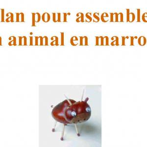 plan de montage d'un animal en marrons couverture