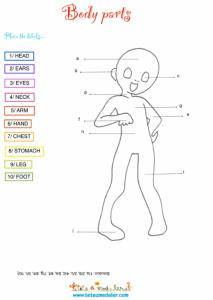 Body parts : les parties du corps en anglais