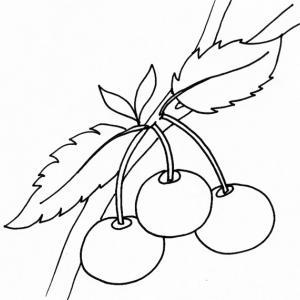 coloriage de cerises sur la branche