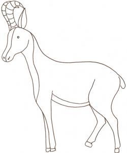 coloriage d'un chamois