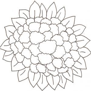 coloriage d'un chou-fleur