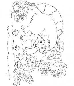 Coloriage du raton dans les fougères